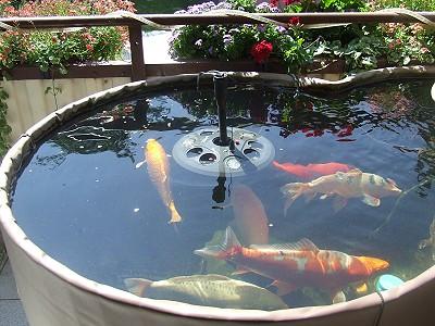 Vom Koi Miniteich Auf Dem Balkon Zum Klassischen Gartenteich Mit