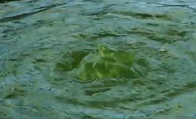grünes wasser im gartenteich