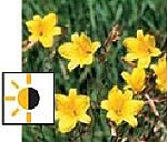 teichpflanzen für die uferzone - Taglilie