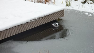 Eisfreier Bereich im Gartenteich bis minus 20 Grad Celsius