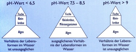 wasserpflege gartenteich - ph_wert_schwankung im gartenteich