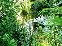 Wunderbar klarer Teich – Sicht auf Teichboden