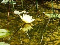 algenblüten im gartenteich vermeiden